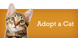 adopt-cat