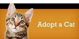 Adopt a Cat Shamrock Pets