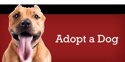 adopt-dog