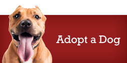 Adopt a Dog Shamrock Pets